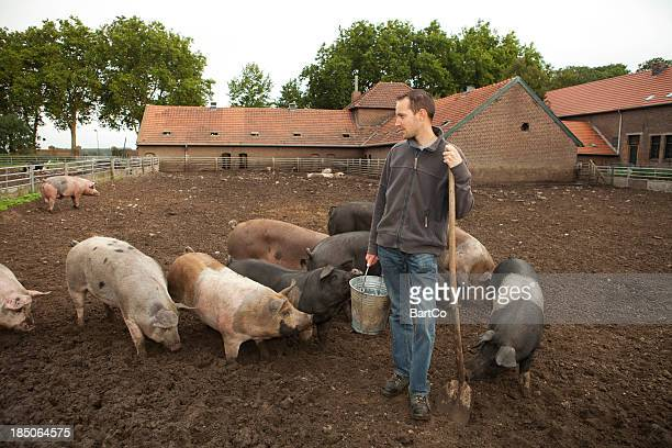 Farmer with pigs