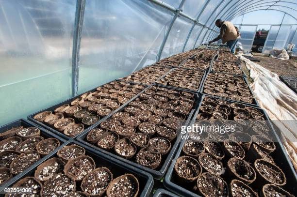 Farmer with seed pots in greenhouse
