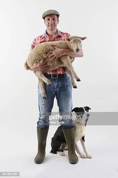 farmer with sheep and dog - farmer stock pictures, royalty-free photos & images