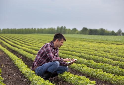 Farmer with tablet in soybean field 962190590