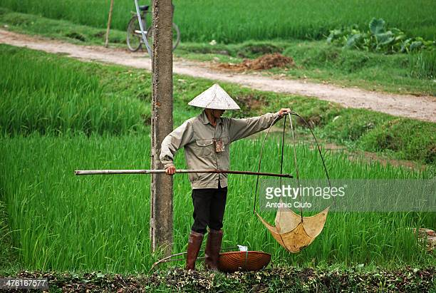 Farmer, with typical Vietnamese hat, hunting frogs in a canal. Frogs are raised commercially in certain countries including Vietnam, and are used in...