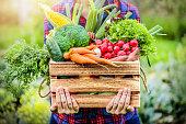 Farmer woman holding wooden box full of fresh raw vegetables.