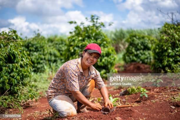 mulher agricultora plantando café. - culturas - fotografias e filmes do acervo