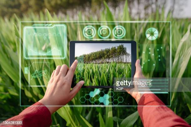 farmer woman using digital tablet with virtual reality artificial intelligence (ai) for analyzing plant disease in corn agriculture fields. technology smart farming and innovation agricultural concepts. - スマート農業 ストックフォトと画像
