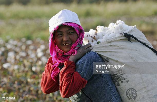A farmer worker carries a bag of cotton after she picked a full bag in a cotton field on October 10 2006 in Korla city Xinjiang Uygur Autonomous...