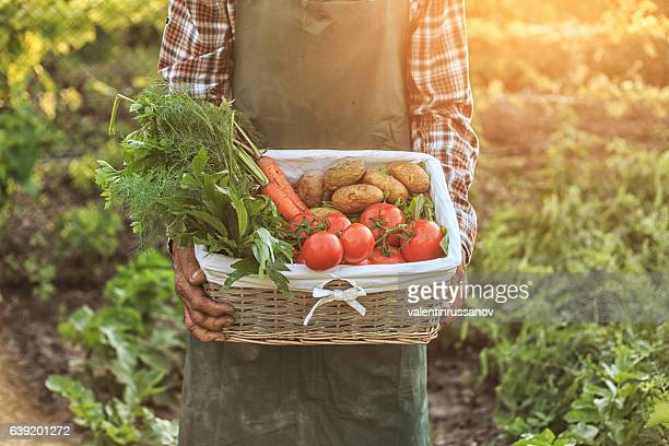 Farmer worker holding a basket with vegetables
