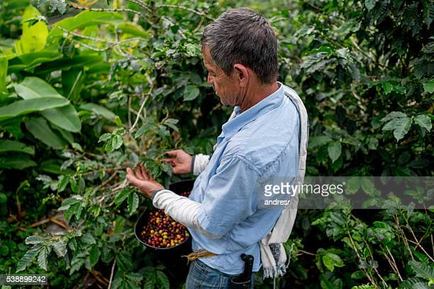Farmer working at a coffee farm