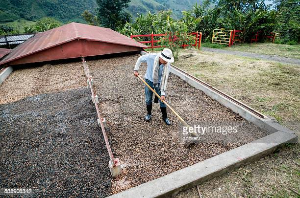 Farmer working at a Colombian coffee farm