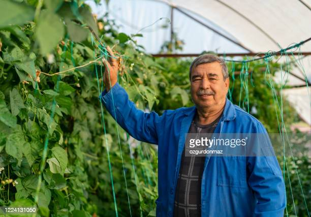 farmer working in greenhouse, mugla turkey - middle east stock pictures, royalty-free photos & images