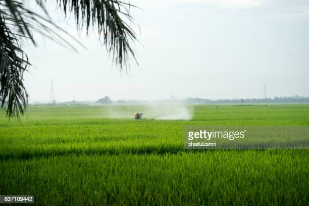 farmer working in paddy field - shaifulzamri stock pictures, royalty-free photos & images