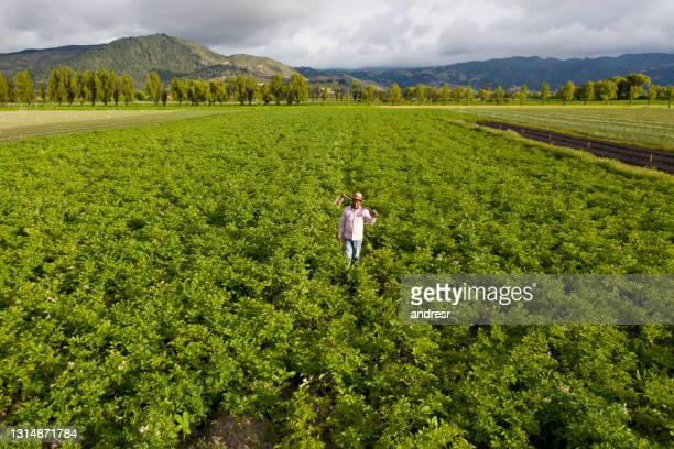 farmer working in the field growing potatoes - south america stock pictures, royalty-free photos & images