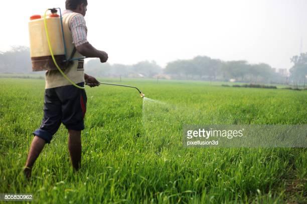Farmer working in wheat field
