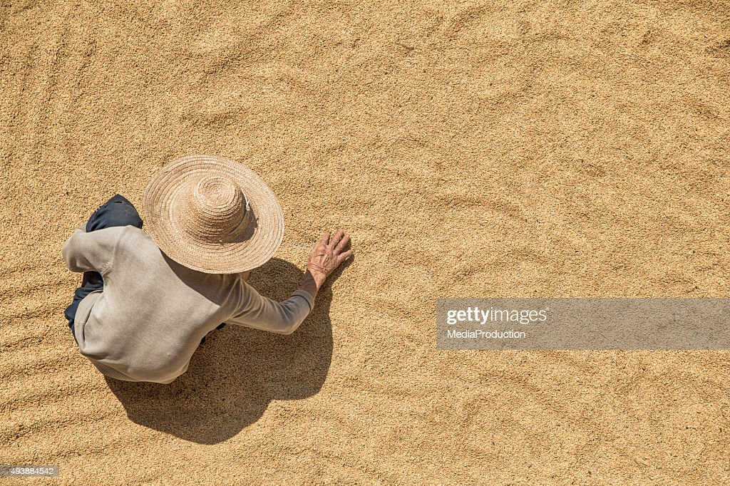 Farmer working on harvested grains from above : Stock Photo