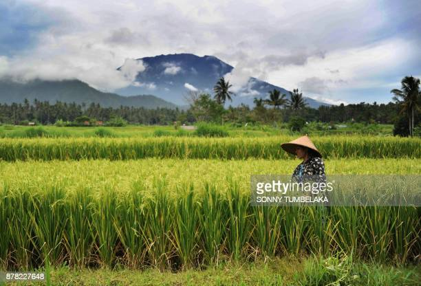 TOPSHOT A farmer works in a field as Mt Agung volano looms in the background in the Rendang subdistrict of Karangasem Regency on Indonesia's resort...