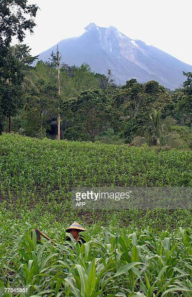 Farmer works in a field as the Mount Soputan , a volcano on Indonesia's Sulawesi island, is seen spewing ash in Minahasa, 50 kilometres south of...
