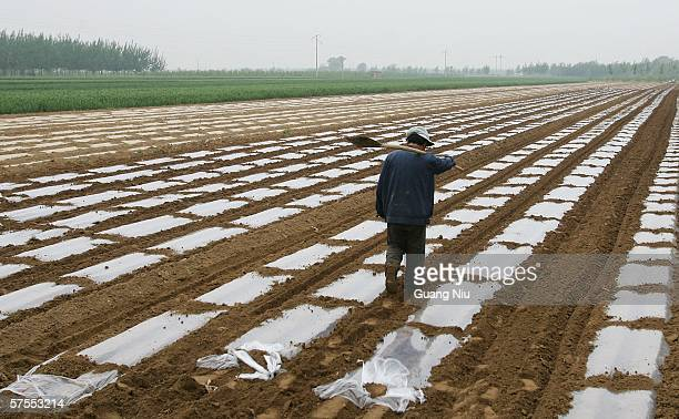 A farmer works in a peanut field May 3 2006 on the outskirts of Baoding city Hebei province China China has highlighted the plight of the nation's...