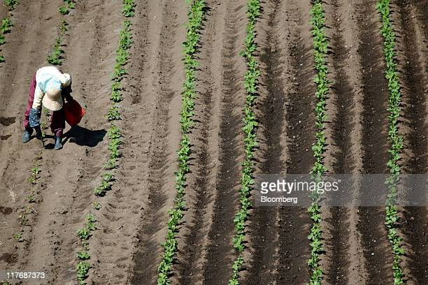 A farmer works in the fields near a construction site for Electric Power Development Co's Oma nuclear power plant in Oma Town Aomori Prefecture Japan...