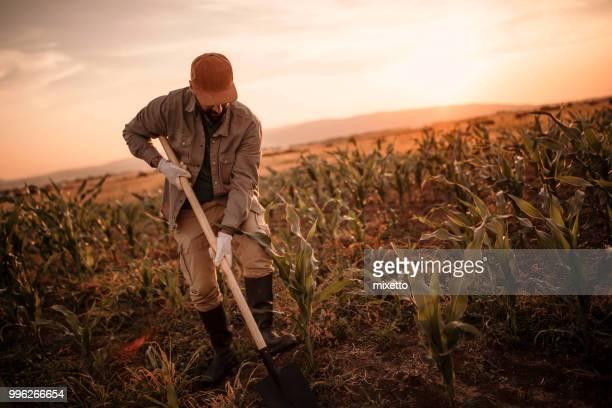 farmer works on his field - attività agricola foto e immagini stock