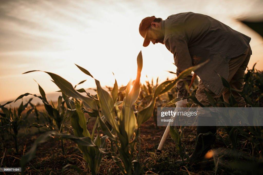 彼のフィールドで働く農夫 : ストックフォト
