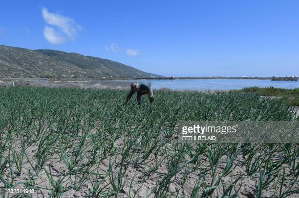 Farmer works on his plot of land near the sea in the small fishing town of Ghar El Melh in Tunisia's north, on March 31, 2021. - Farmers near a...