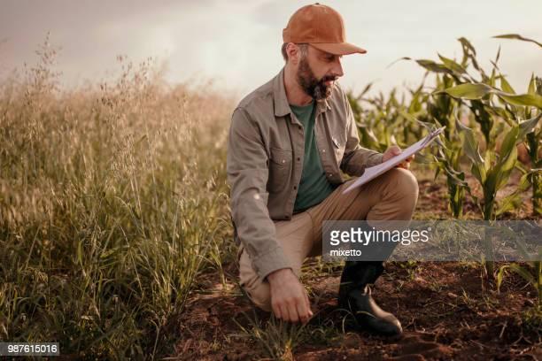 farmeranalyzes terra no seu campo - trabalhador rural - fotografias e filmes do acervo