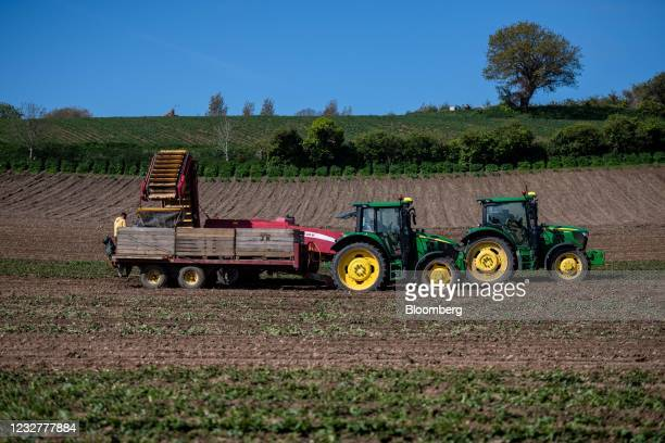 Farmers and seasonal workers harvest potatoes near Fauvic, Jersey, on Saturday, May 8, 2021. Frances maritime minister suggested that her government...