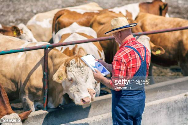 Farmers are recording details of each cow on the farm