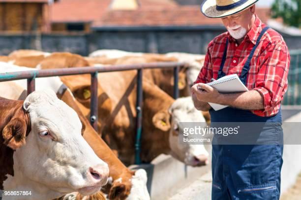 jordbrukarna spelar in detaljer för varje ko på gården - biffkor bildbanksfoton och bilder