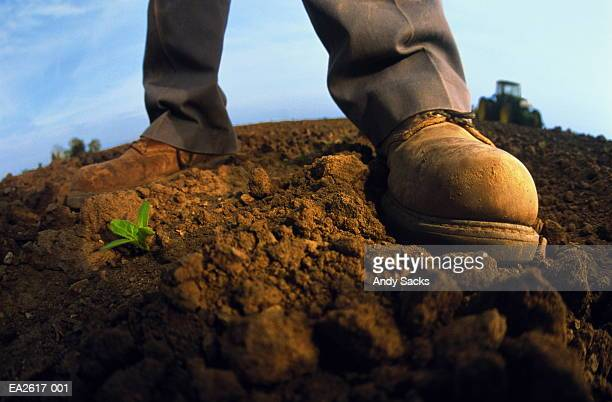 farmer's boots beside young bean plant, close-up - ankle boot stock pictures, royalty-free photos & images