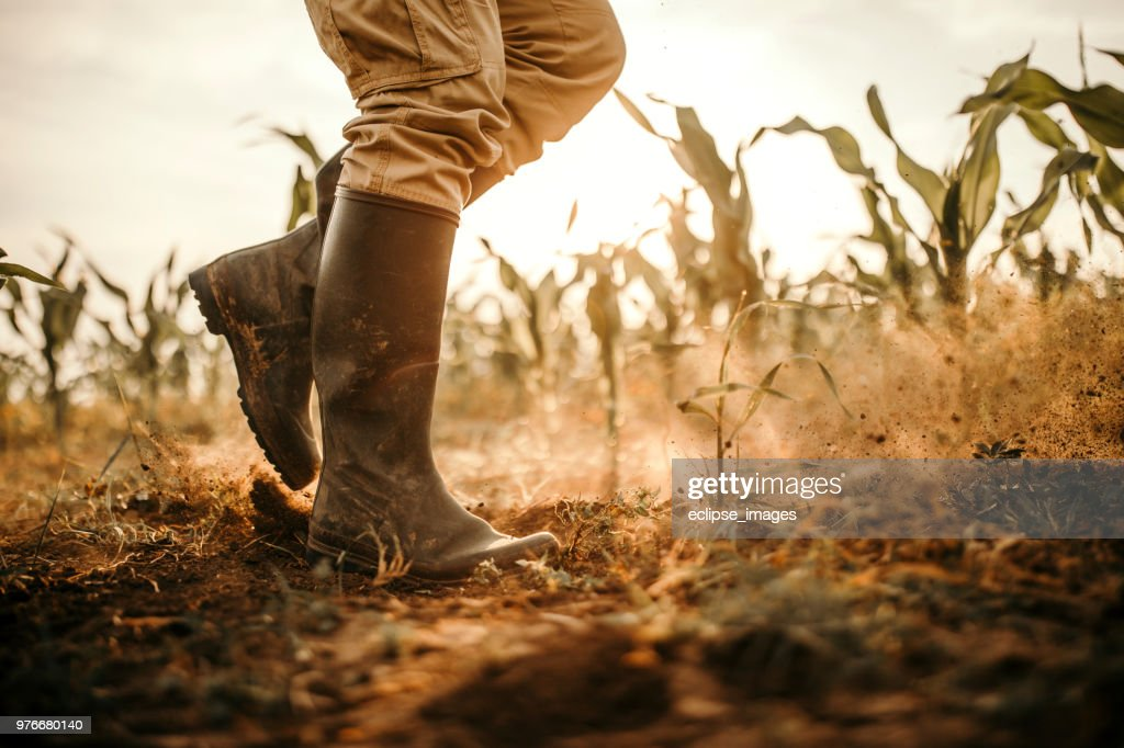 Farmers boots : Stock Photo