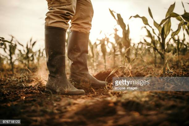 farmers boots - agronomist stock pictures, royalty-free photos & images