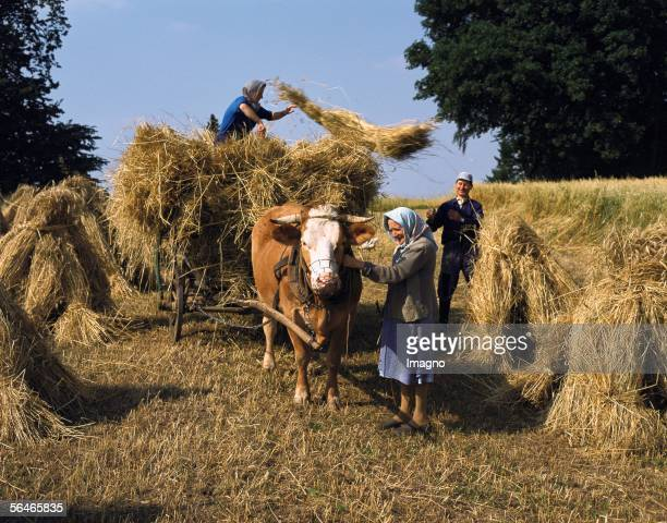 Farmers bringing in the hay Austria Photography Around 1995 [Bauern bei der Heuernteoesterreich Photographie Um 1995]