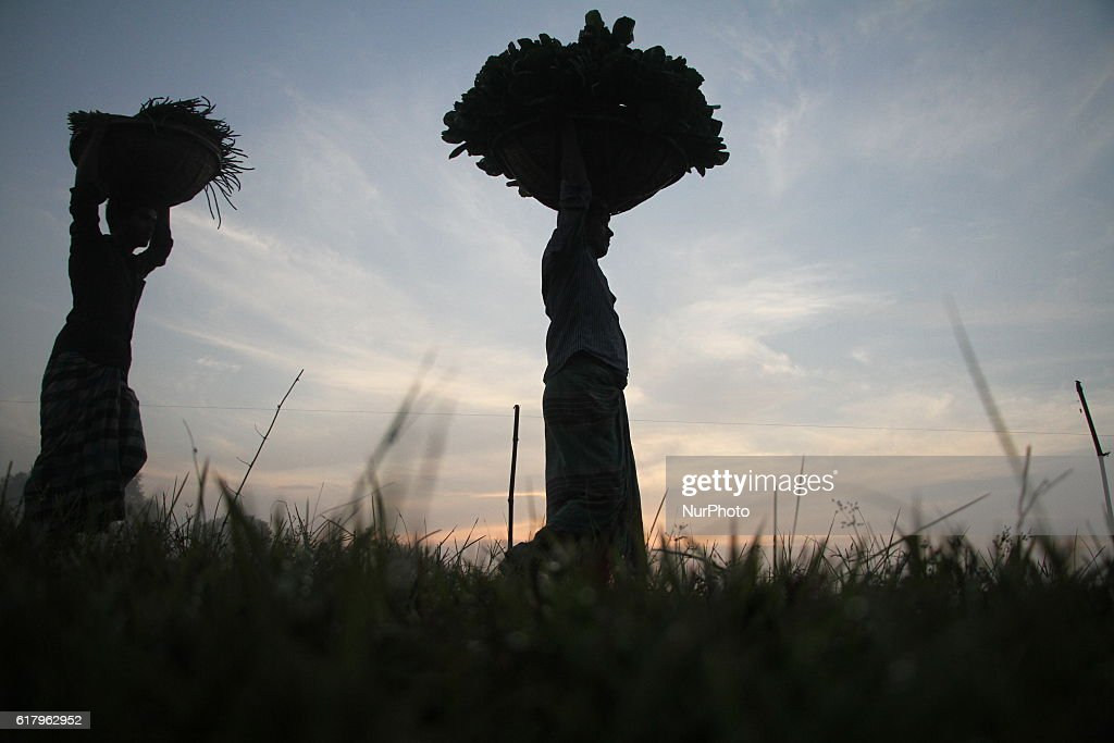 Farmers carry vegetables on their head to sell them at a market outside of Dhaka, Bangladesh on October 25, 2016. Vegetable production is contributing to the nutrition strategy of Bangladesh. Average agriculture sector GDP annual growth reached 3.5 per cent.