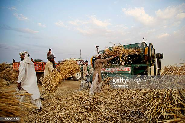 Farmers collect and thresh bundles of wheat during a harvest in the Chakwal district of Punjab province Pakistan on Saturday May 4 2013 Pakistan...