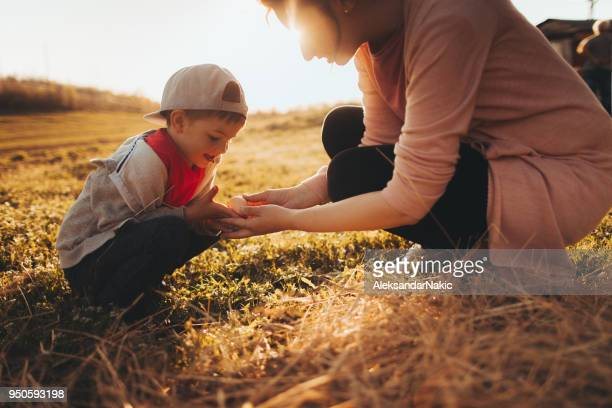 farmers collecting eggs on a farm - farm stock pictures, royalty-free photos & images