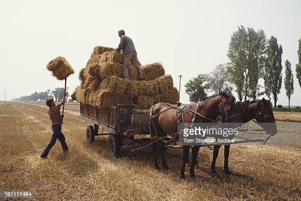 Farmers collecting straw near Bucharest after the Romanian Revolution 1990