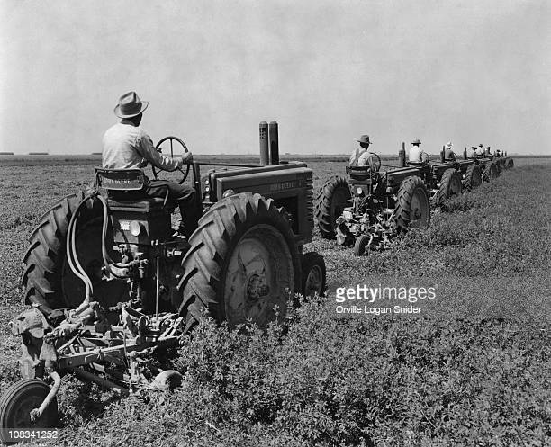 Farmers driving John Deere tractors fitted with mowers harvest a field of alfalfa Bakersfield California circa 1950