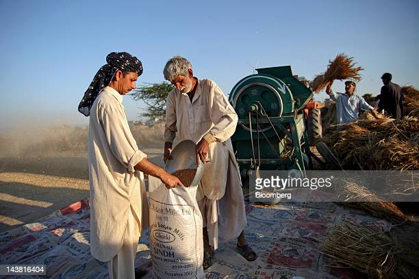 Farmers fill a sack with wheat during a harvest in the Chakwal district of Punjab province Pakistan on Thursday May 3 2012 Pakistan is Asia's...