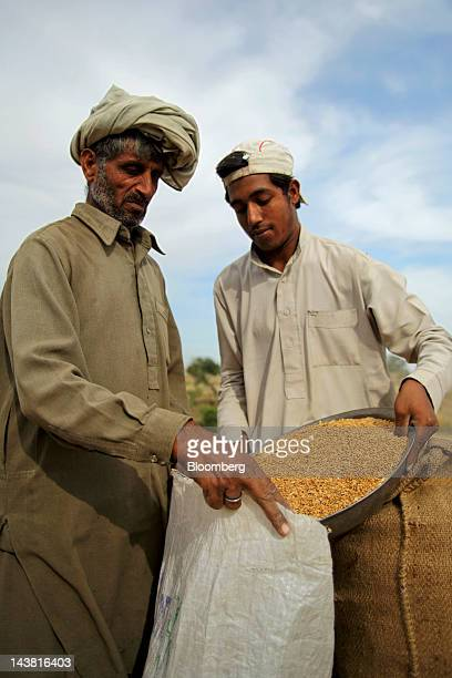 Farmers fill a sack with wheat during a harvest in the village of Fatehganj in Punjab province Pakistan on Thursday May 3 2012 Pakistan is Asia's...