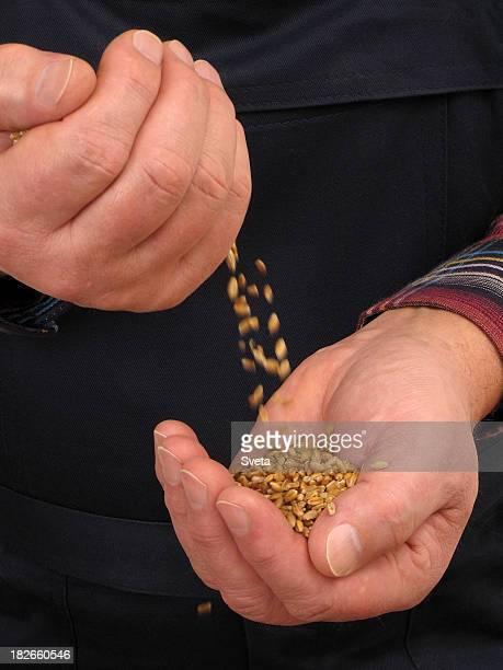 Farmer's Hands 1