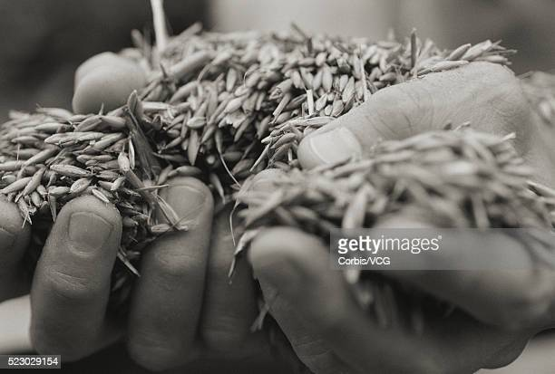 farmers hands - vcg stock pictures, royalty-free photos & images
