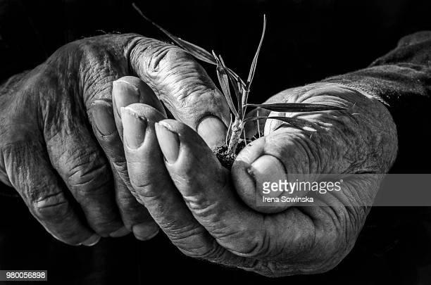 farmer's hands - main noir et blanc photos et images de collection