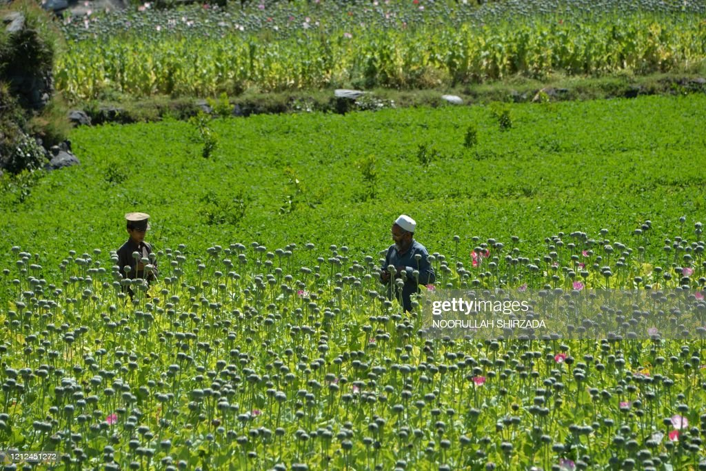 TOPSHOT-AFGHANISTAN-CONFLICT-DRUGS : News Photo