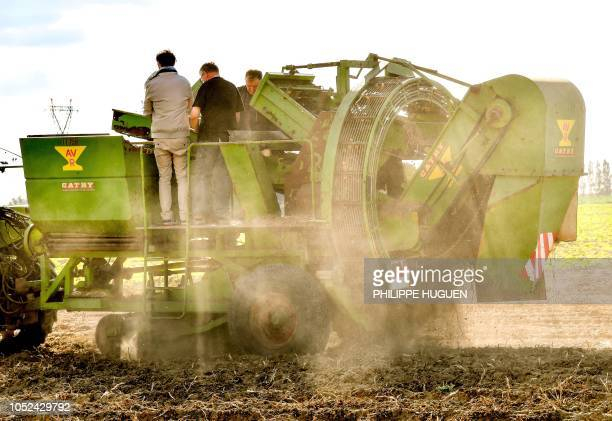 Farmers harvest potatoes in a field in Rexpoëde northern France on October 15 2018 as the harvest reduced following summer drought