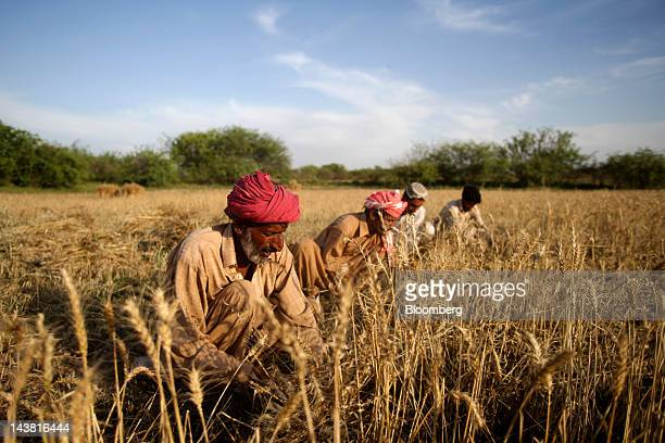 Farmers harvest wheat in the village of Fatehganj in Punjab province Pakistan on Thursday May 3 2012 Pakistan is Asia's thirdlargest grower of wheat...