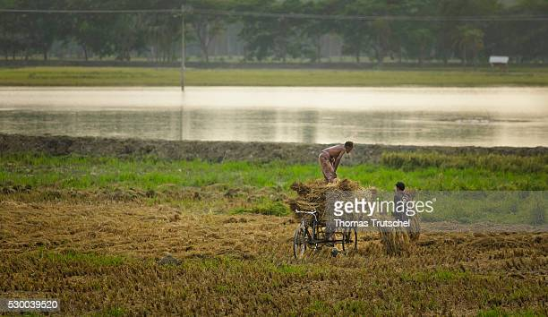 Farmers harvesting rice in a rural region in the southwest of Bangladesh on April 12 2016 in Mongla Bangladesh