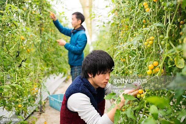 穀物農家の収穫、 - 栽培する ストックフォトと画像