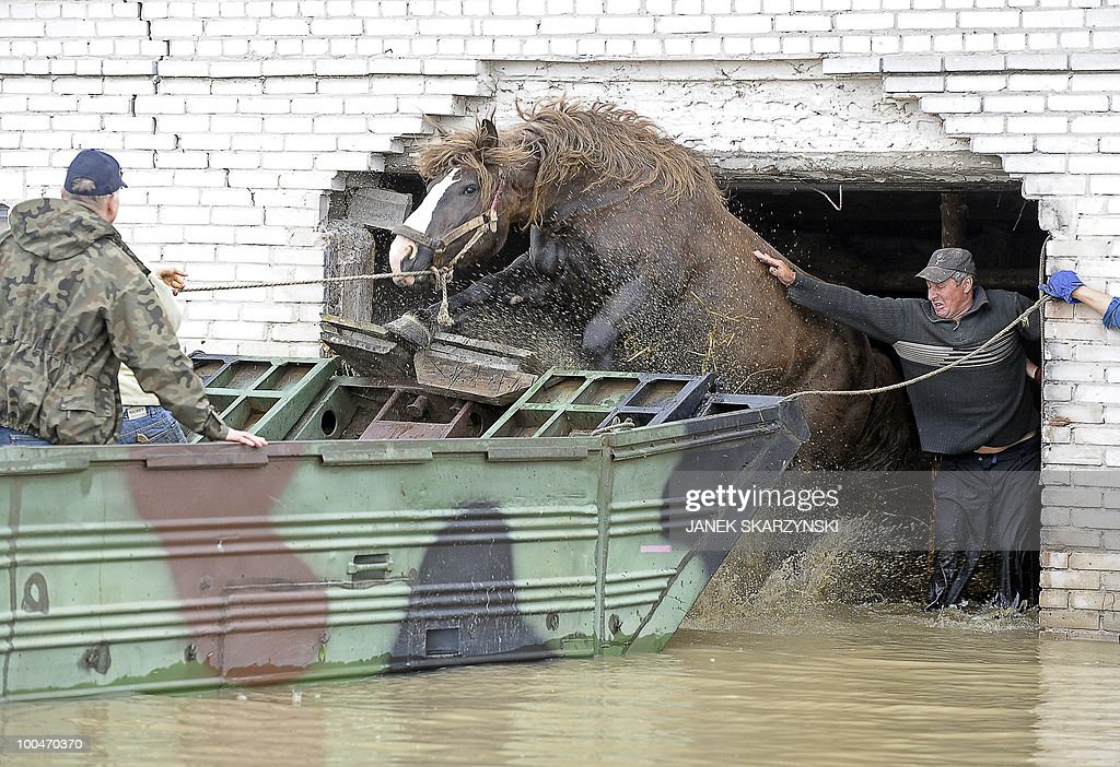 Farmers help a horse to jump into an amphibious vehicle in flooded Juliszew village in central Poland at Wisla river on May 24, 2010 Flash floods caused by days heavy rainfall have hit parts of central Europe, killing at least 14 people, disrupting power supplies and forcing thousands of people from their homes.