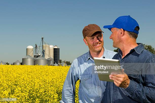 Farmers in Canola