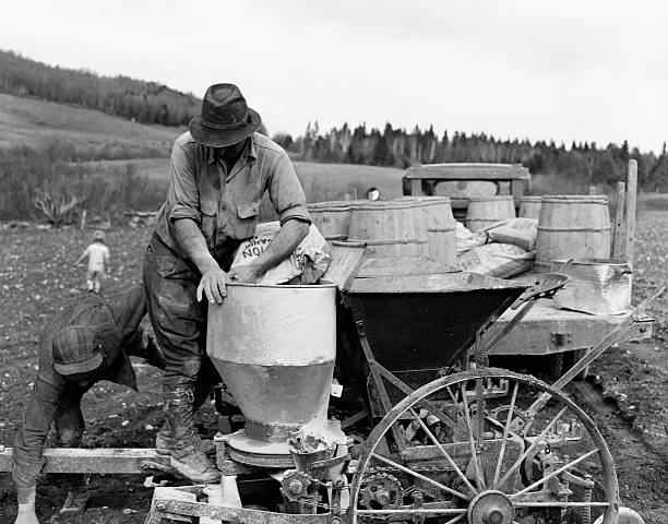 Planting Potatoes Pictures | Getty Images